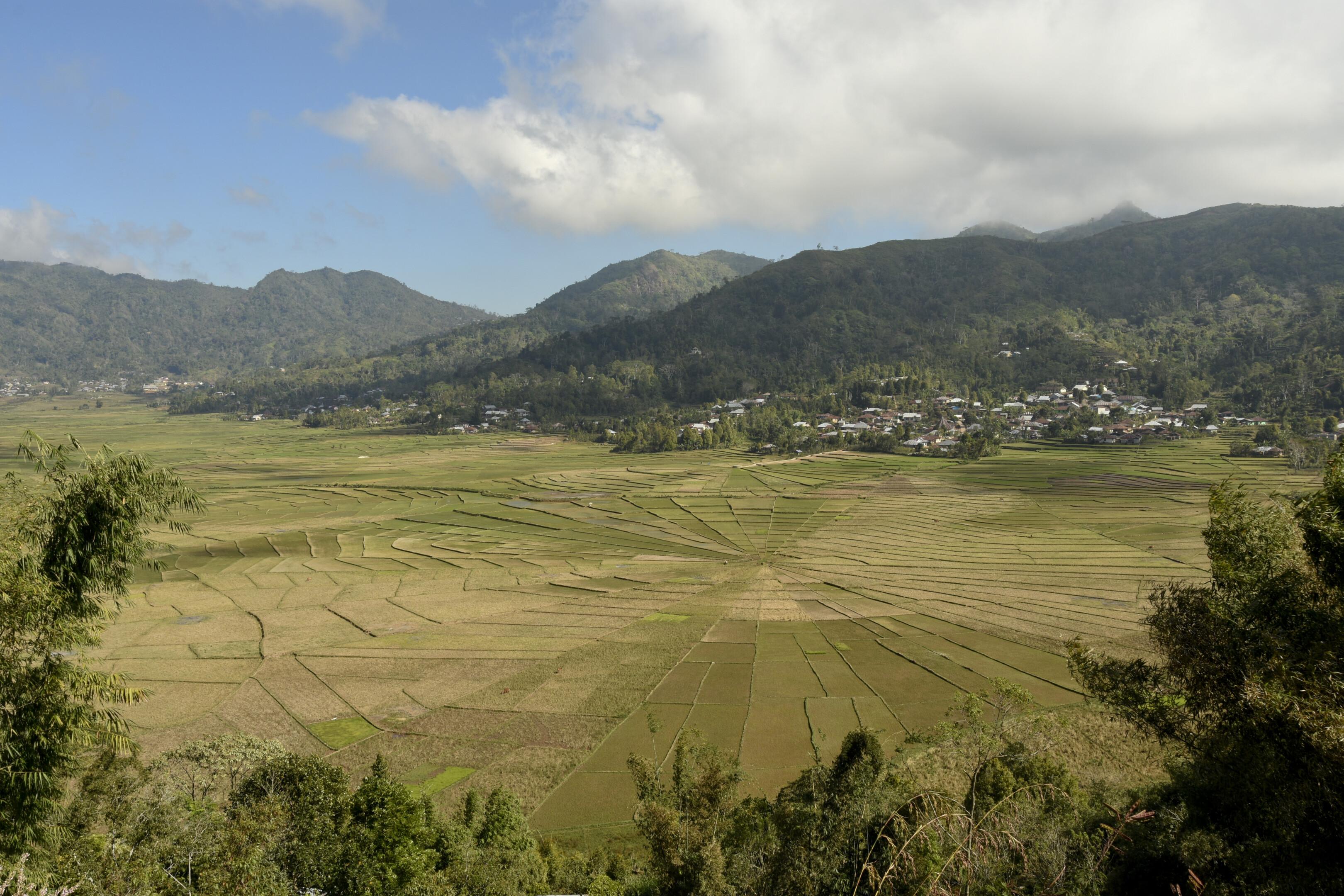 Spider Web Rice Fields, Flores Indonesië