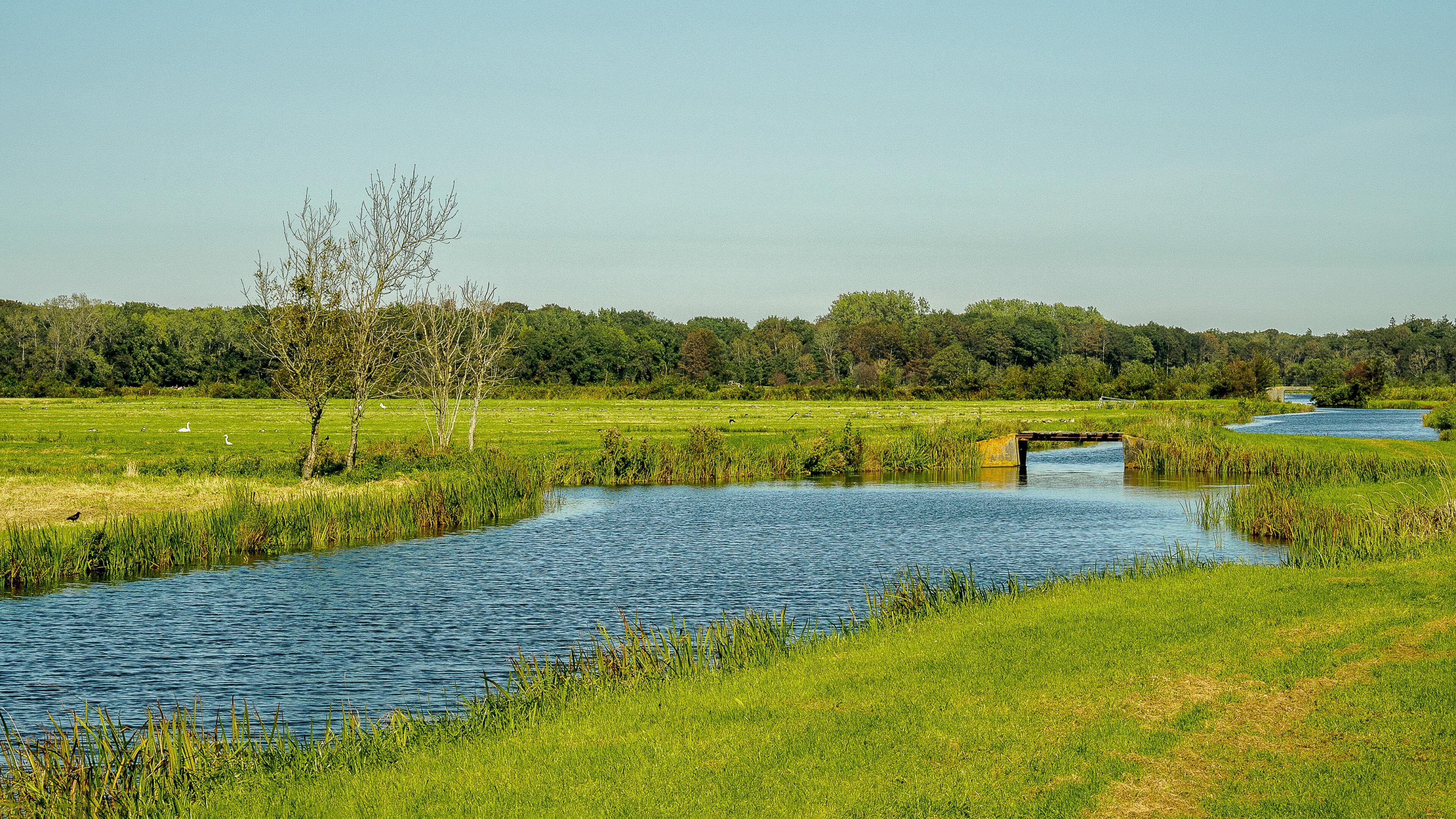 Zuidwijkse polder